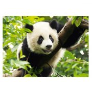 trefl-premium-kategoriaju-500-darabos-puzzle-panda-2